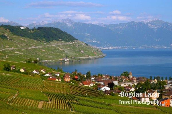 Domeniile viticole Lauvaux, pe malul lacului Geneva, Elveția